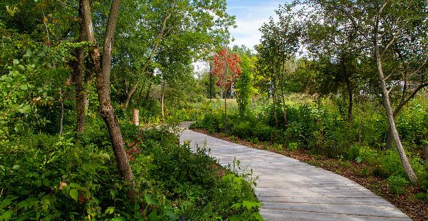 Le sentier de bois de l'étang Roger-Paquet, au parc Terre-des-Jeunes de Victoriaville