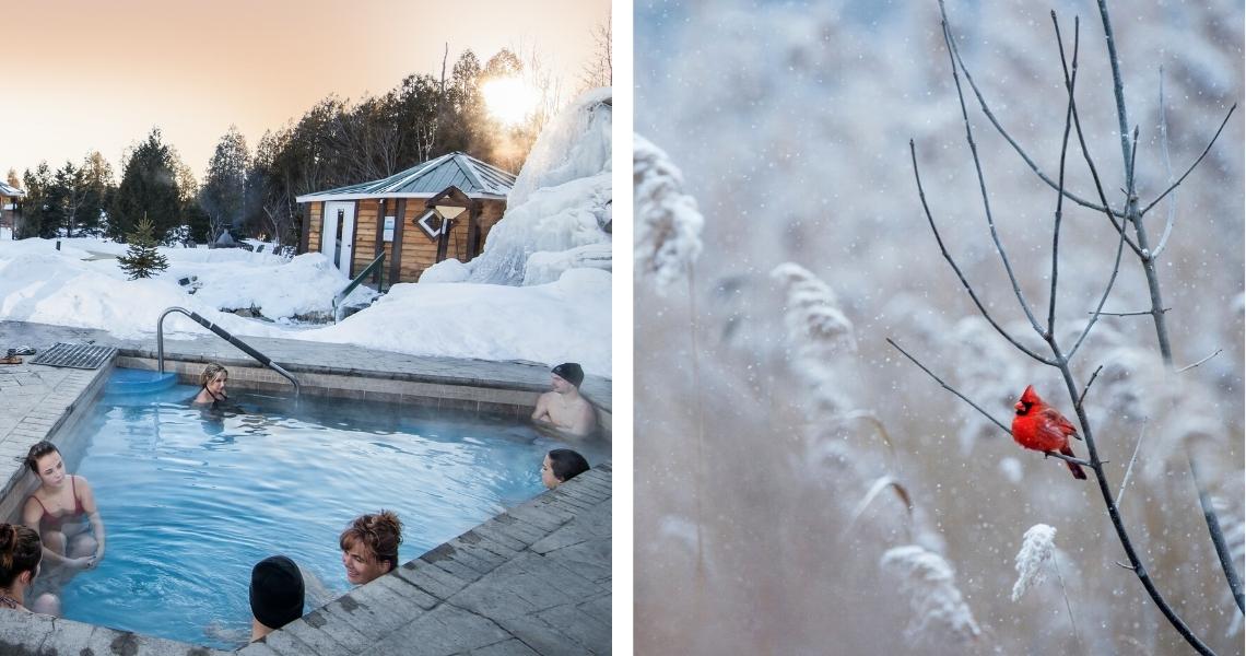 Rêvez à votre prochain moment de détente au Natureza Spa ou partez à la découverte des oiseaux d'hiver de la région! Crédits photos: Exposeimage (gauche), Ray Hennessy (droite)