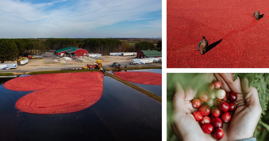Bienvenue au royaume des petits fruits rouges! Crédit photos: Matt Charland (gauche), Les Maximes (droite)