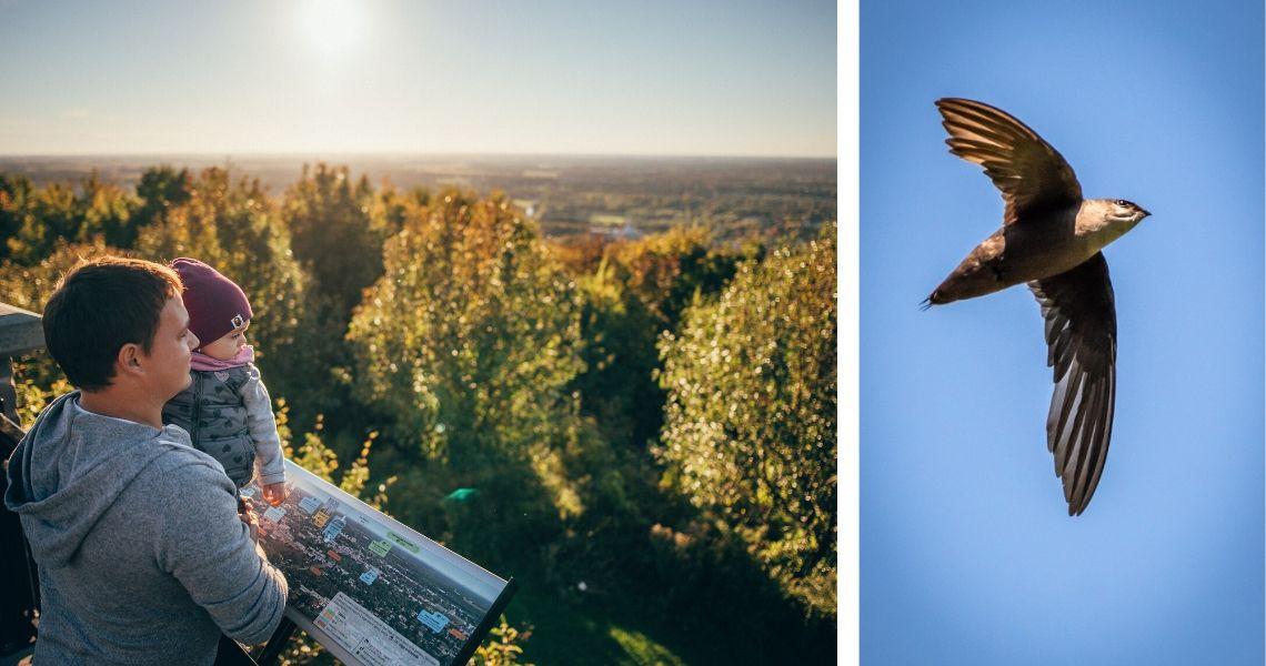 Le Mont Arthabaska offre le plus beau point de vue sur la ville et une terrasse au sommet! Crédit photos: Les Maximes (gauche), James Hoagland (droite)