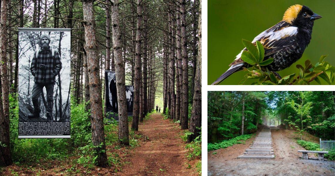 Le Parc du Bois-des-Frères-du-Sacré-Coeur est aussi un lieu artistique animé! Crédit photos: Dominique Laquerre (gauche), Jim Carroll (haut)