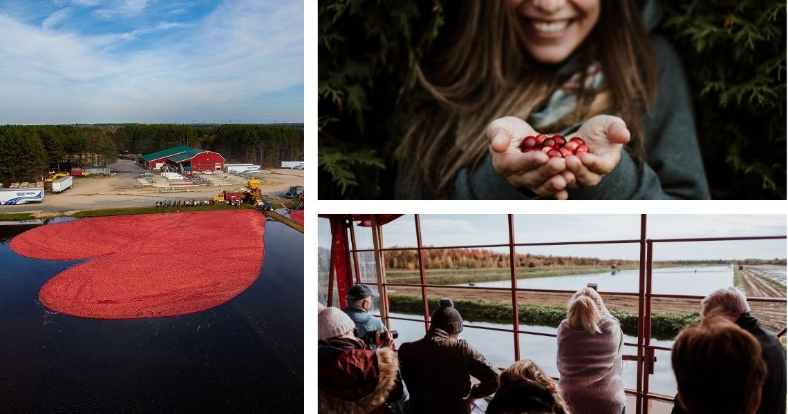 Canneberge en fête, un spectacle d'automne surprenant! Crédits photos: Matt Charland (gauche), Les Maximes (droite)